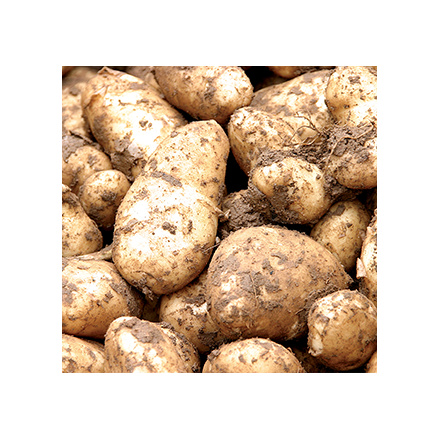 Jersey Royals for Valentine's Day Image
